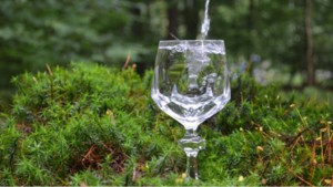 wasserglas-c-trinkwasserwald-72dpi_full