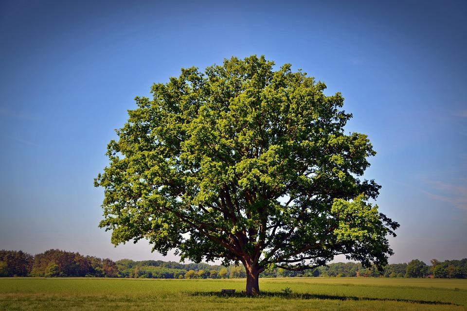tree-2363456_960_720