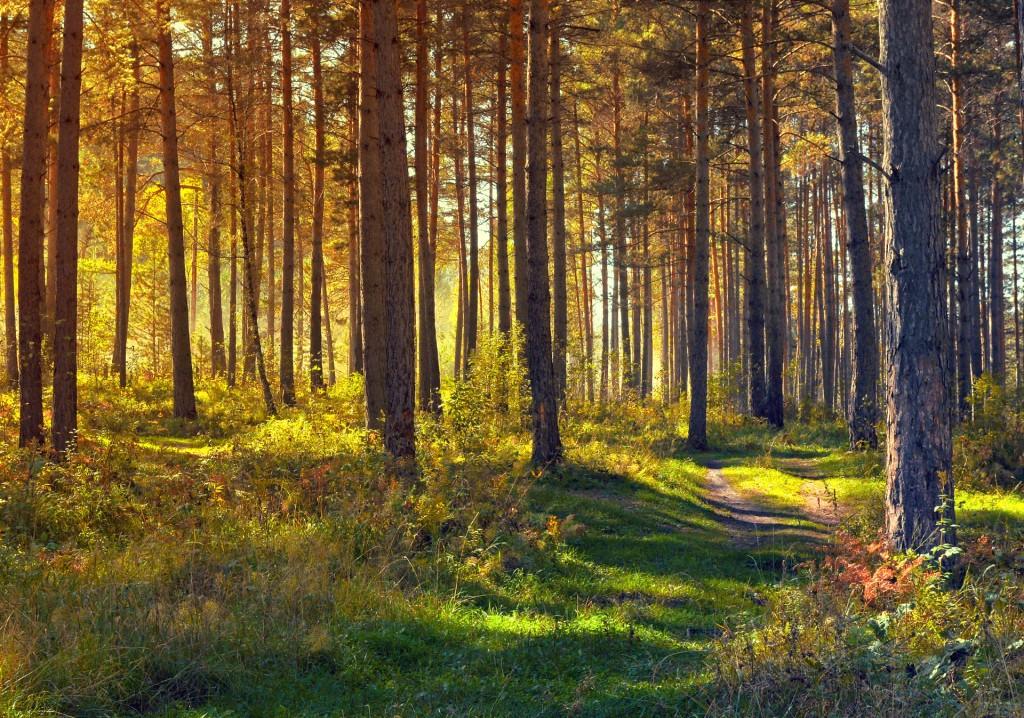 september-in-the-forest-1347854948DKj