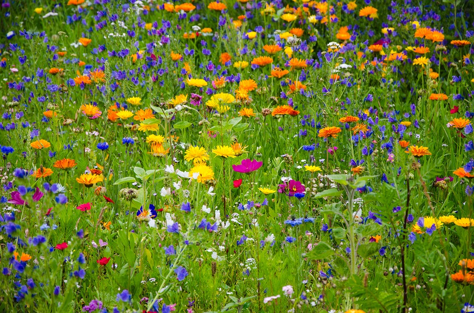 flower-meadow-2509969_960_720